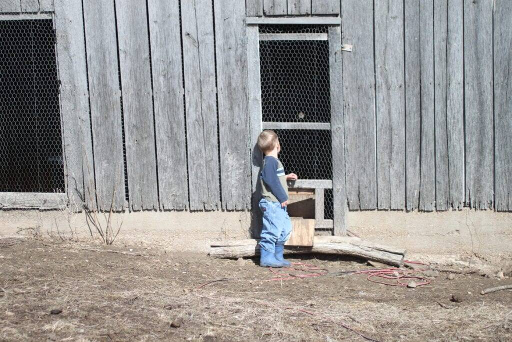 boy chicken house homestead children