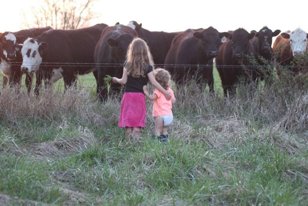 children cattle homestead