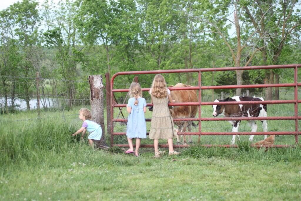 girls homestead cows