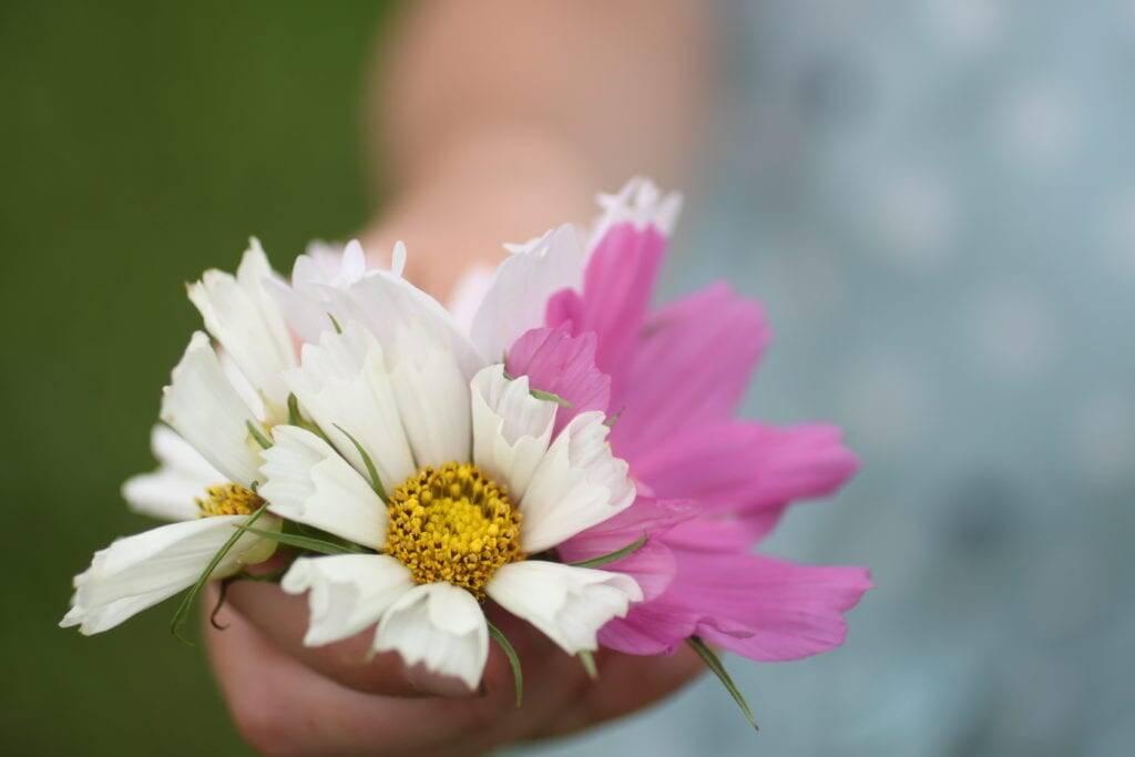flowers homesteading children