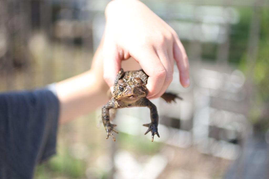 nature hunt frog