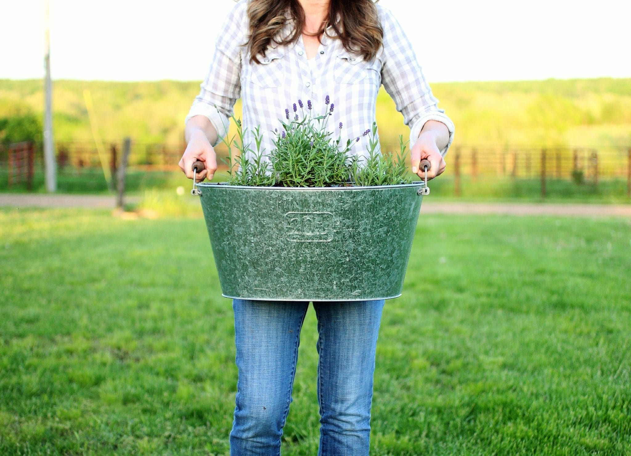 Planting Lavender in Containers