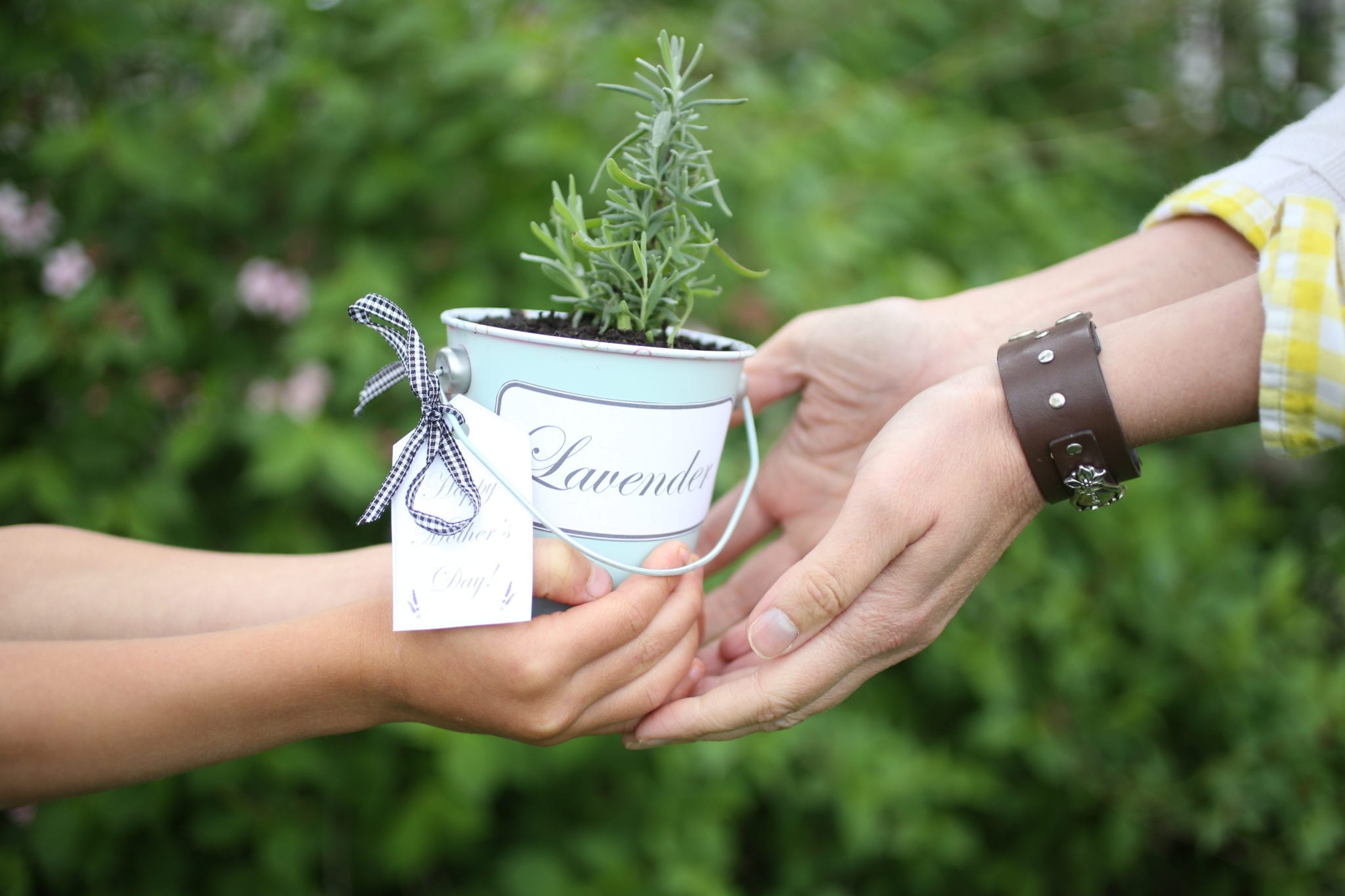 Printable Herb Labels–A Last Minute Gift Idea