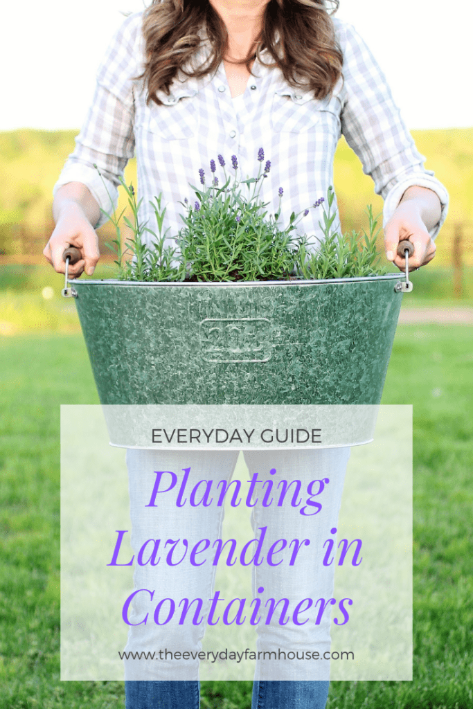 pin planting lavender in containers