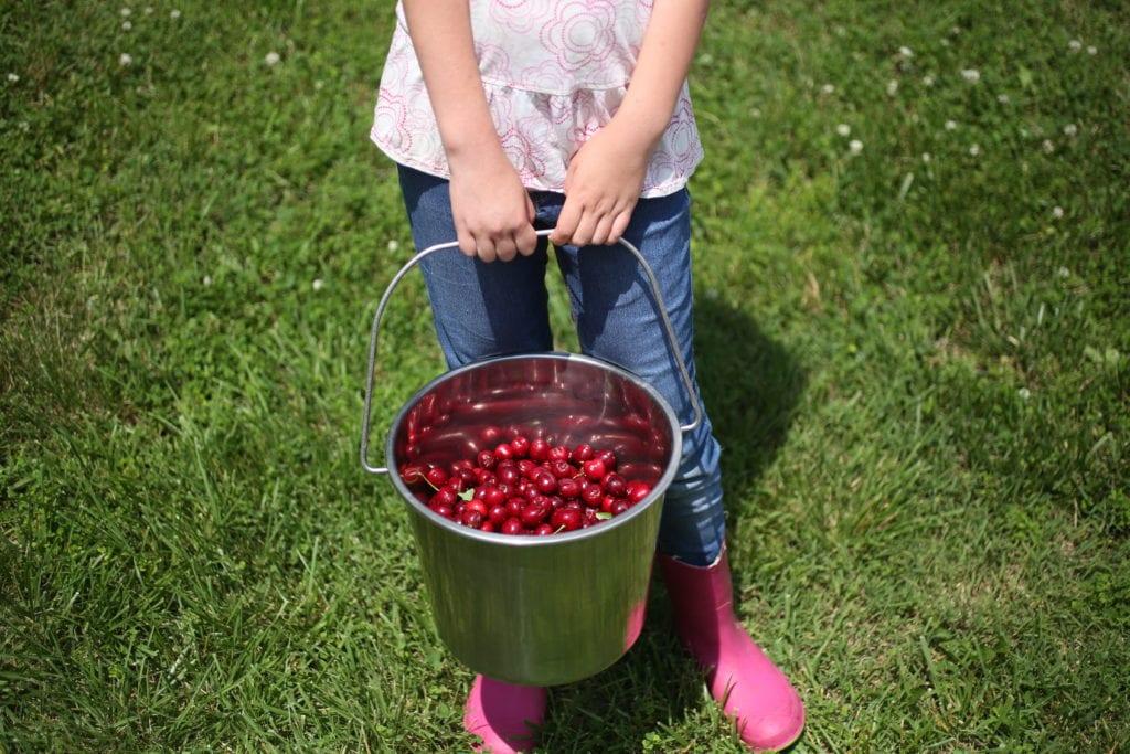 five things berries kids