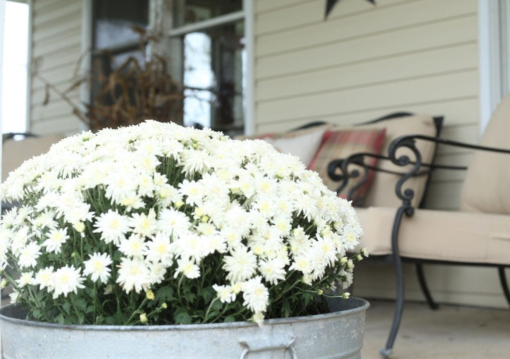 Fall Front Porch Mum