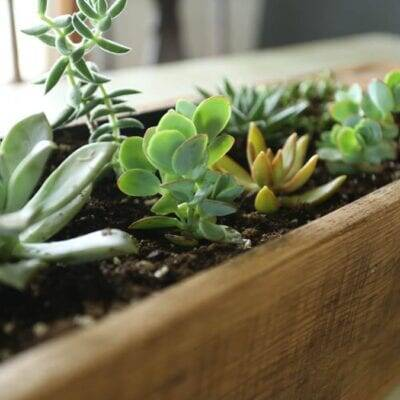 Pallet Wood Succulent Planter–How To