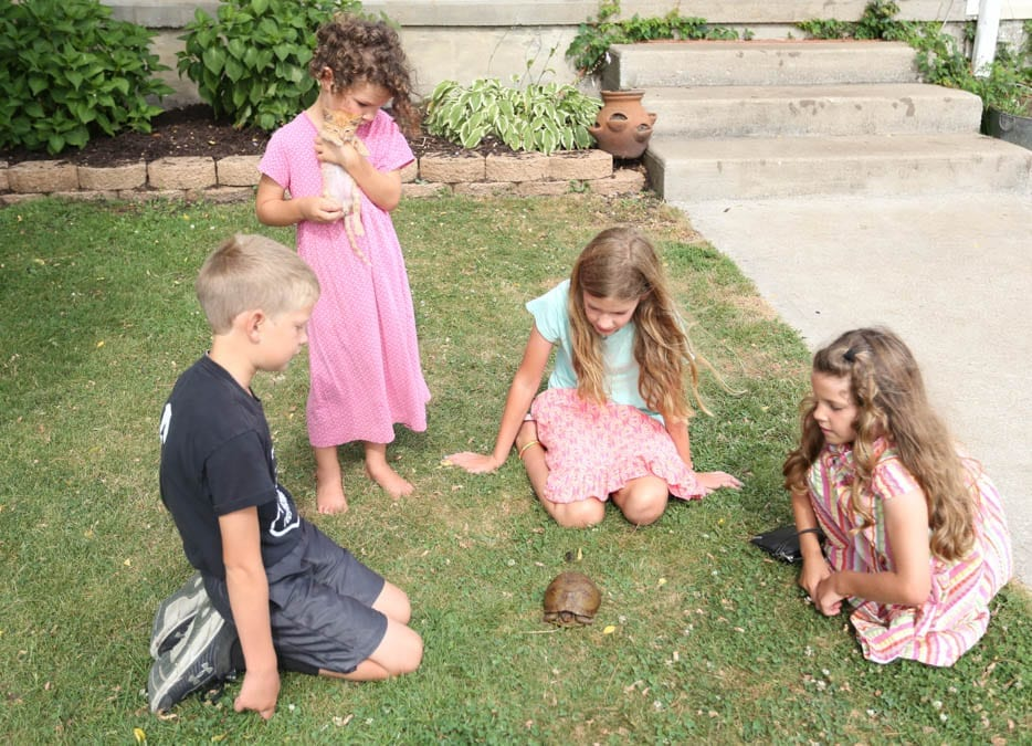 kids with a turtle