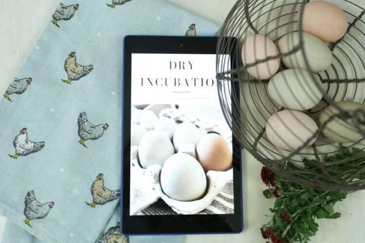 dry incubation