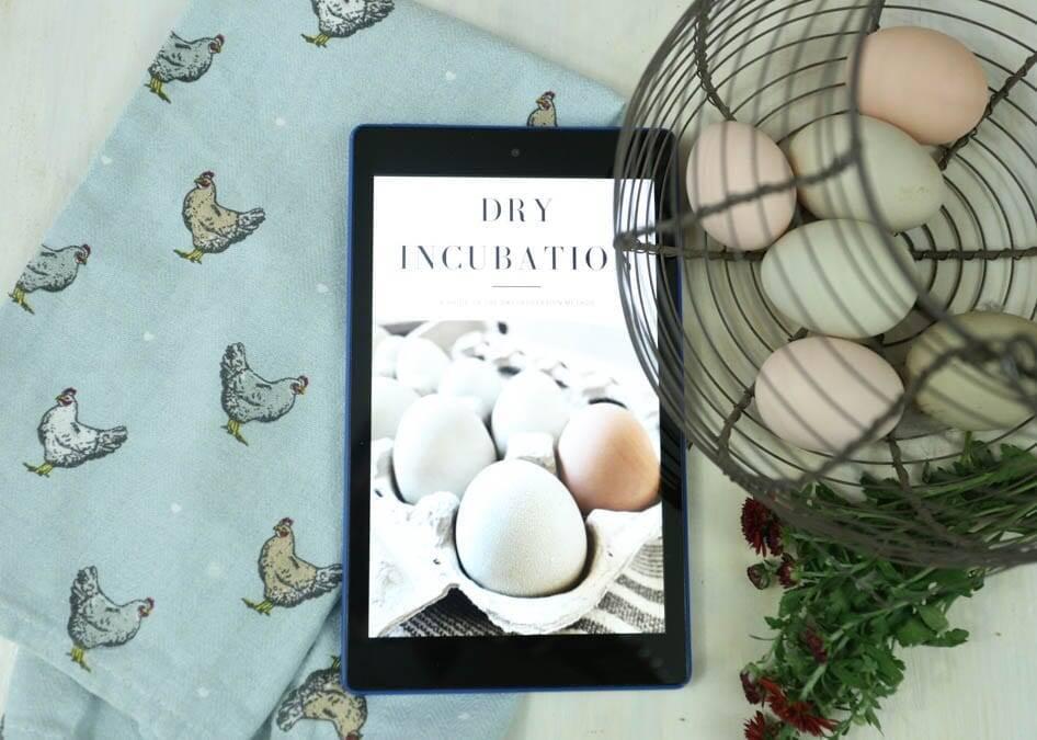 Dry Incubation Homestead Living