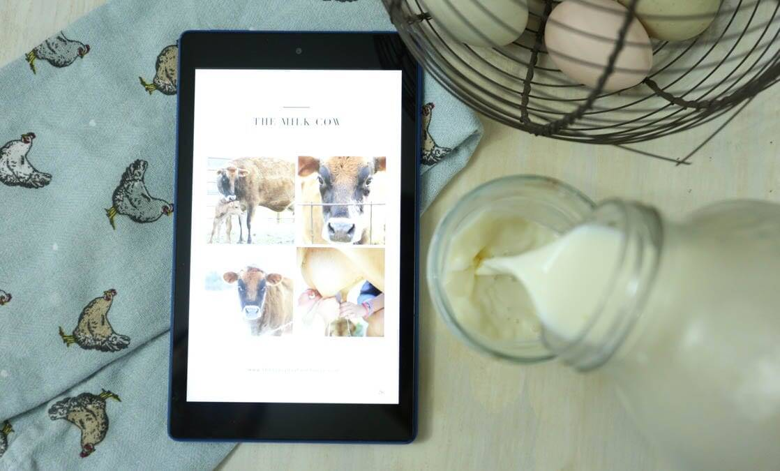 A Beginner's Guide Milk Cow