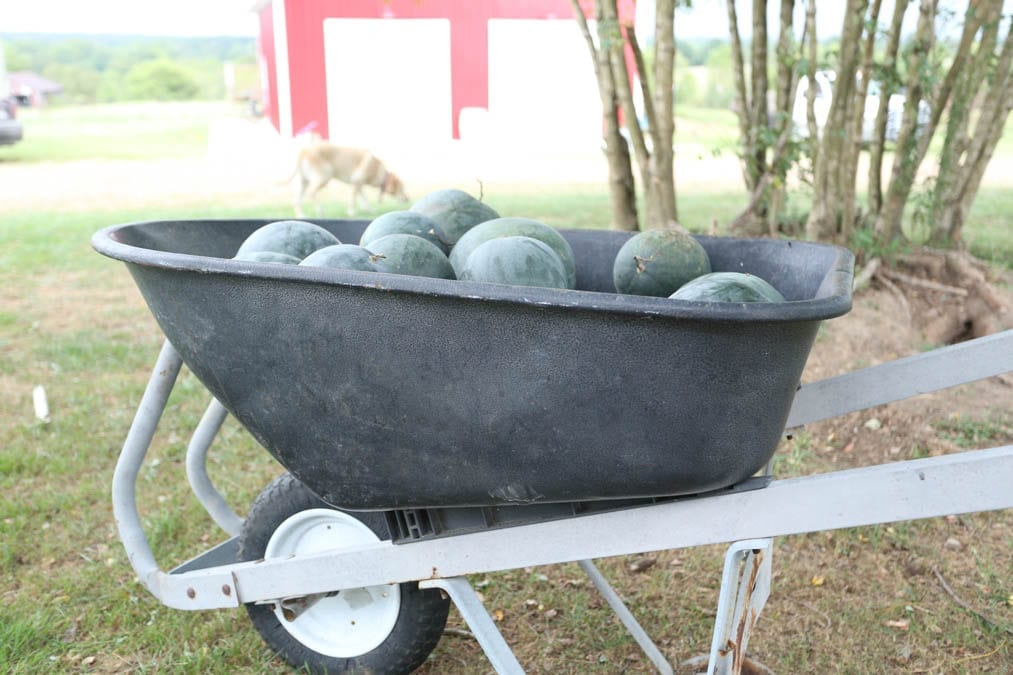 wheelbarrow watermelon