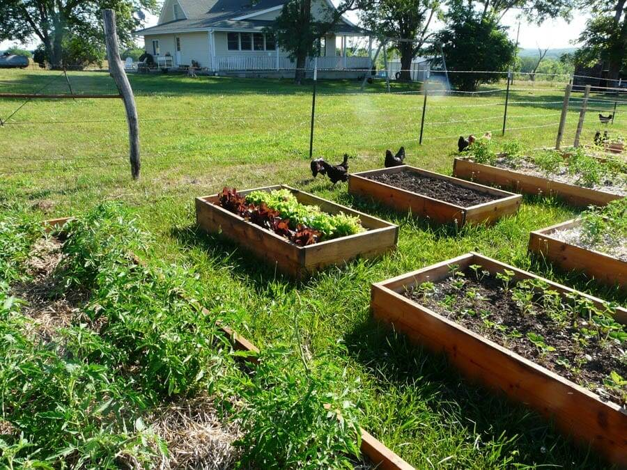 garden tips raised beds