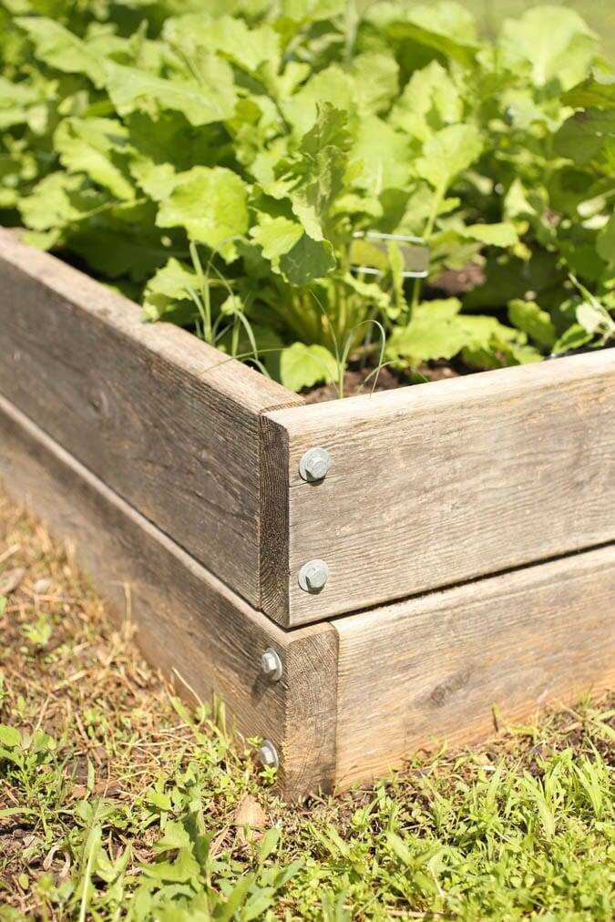 The Summer Garden Edition of A Beginner's Guide to Homestead Living!