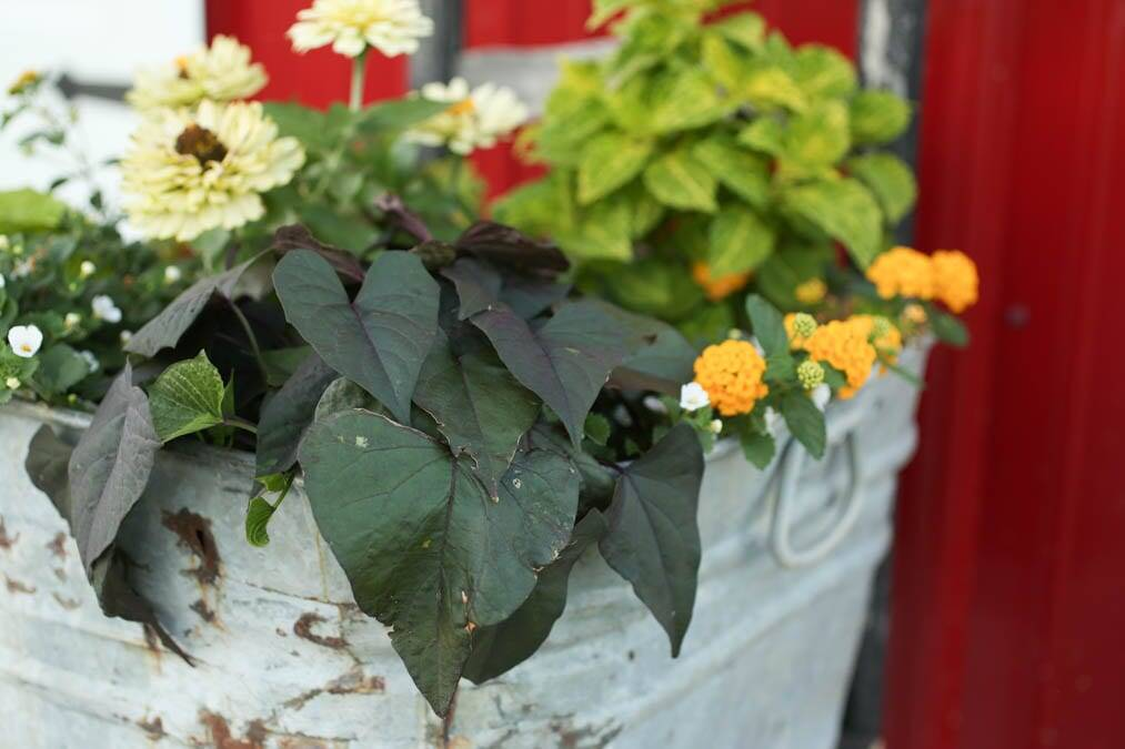 Stunning flower pot washtub