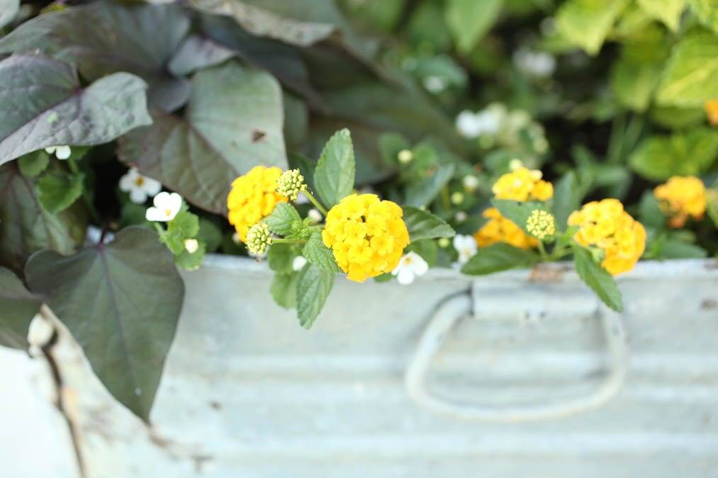 create the best large flower pots