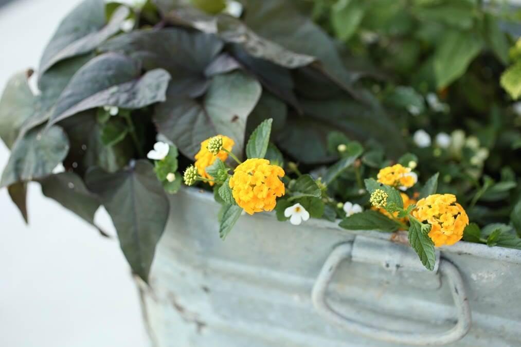 create interesting flower pots