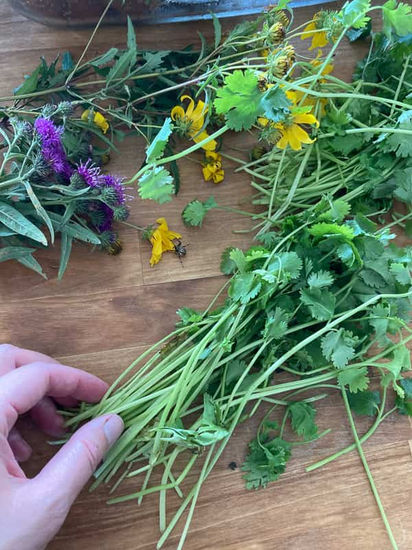 Timing is important when harvesting herbs or flowers for drying. A warm dry morning after the dew is gone is the best time to harvest your herbs or flowers.